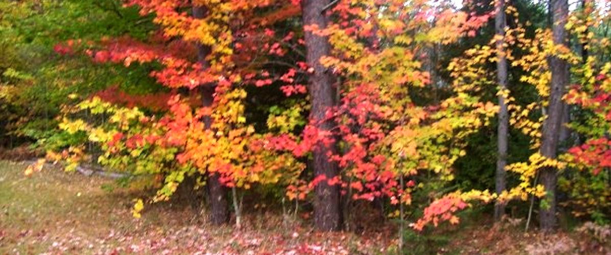 Fall4-1200x500.jpg